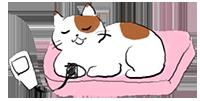 猫の血圧測定